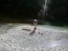 P31-07-10_09.18_s062.jpg